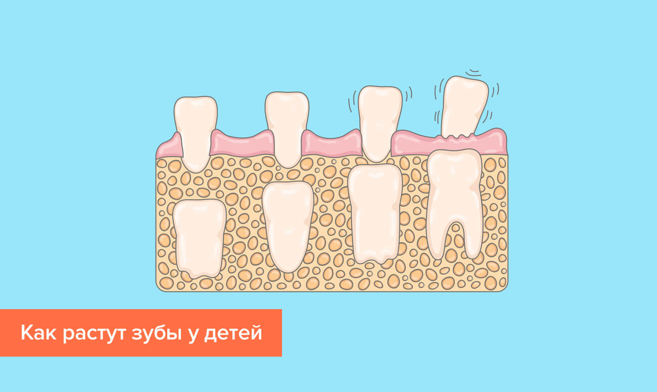 Схема выпадения молочных и роста постоянных зубов у детей