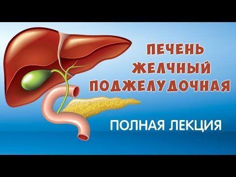 Препараты для лечения желчного пузыря и поджелудочной железы