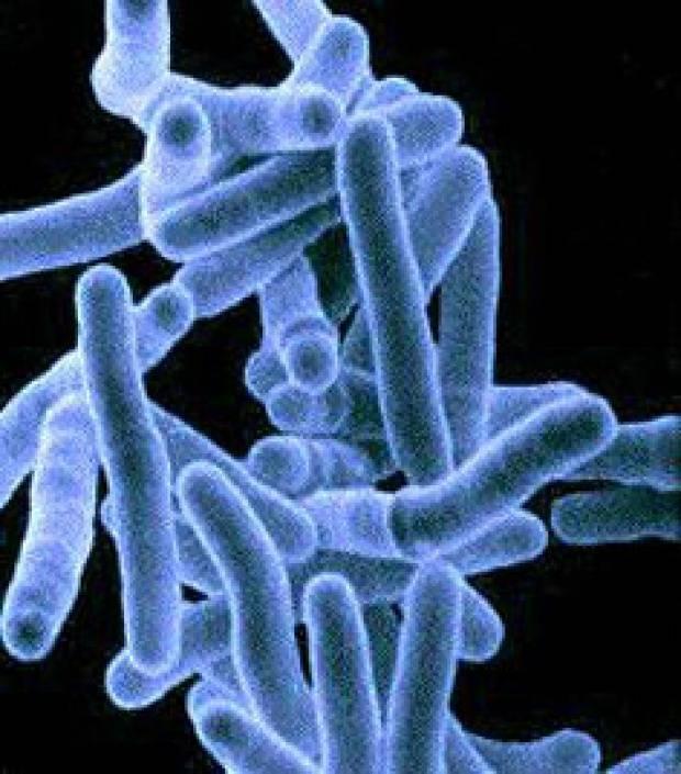 Классификация туберкулеза легких, его формы и стадии