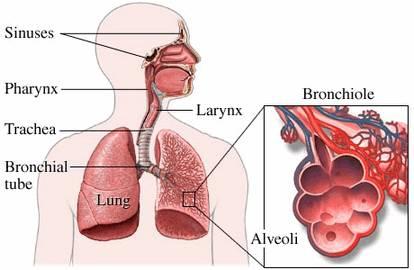 Профилактика заболеваний органов дыхания — дышите свободно!