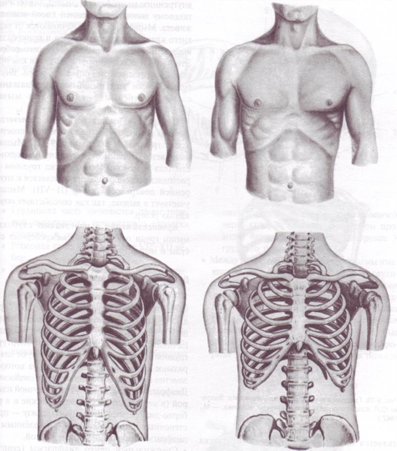 Все про деформацию грудной клетки