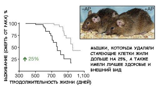 Польза и вред кверцетина