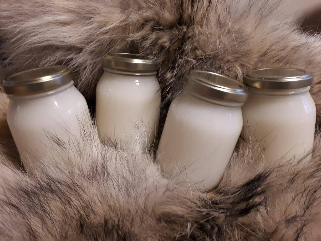 Помогает ли медвежий жир при кашле?