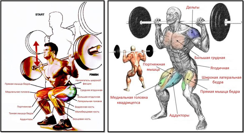 Мышцы бедра. передняя группа