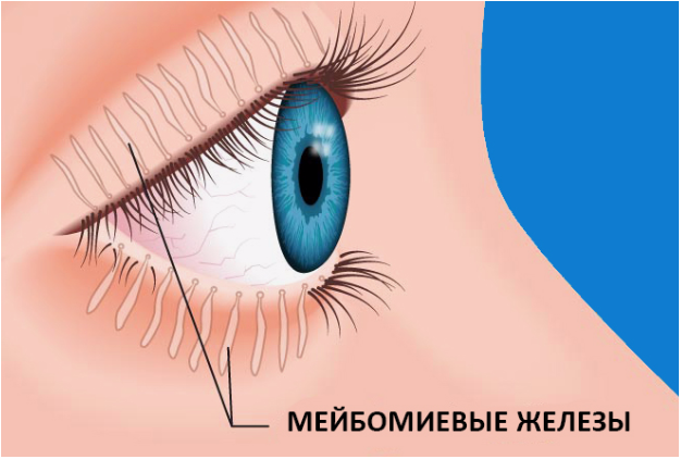 Мейбомит нижнего и верхнего века: лечение, массаж и симптомы