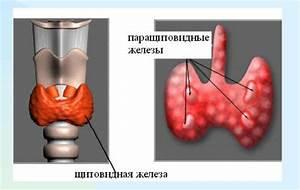 Лекарство от цирроза печени сибирские ученые