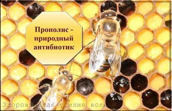 Готовим домашнюю настойку из натурального прополиса на этиловом спирту или водке