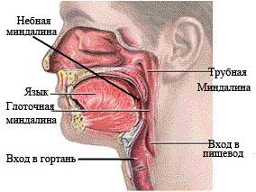Методы лечения хронического тонзиллита у взрослых – профилактика