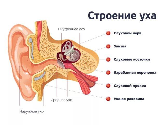 Адгезивный средний отит: причины, симптомы и лечение. причины и способы лечения адгезивного отита