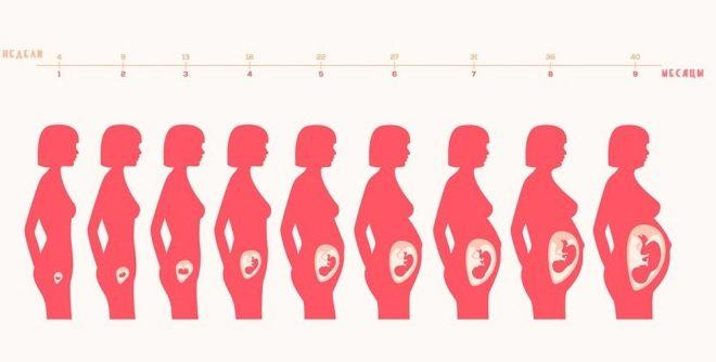 Информация о лохиях, которая будет полезна молодой маме