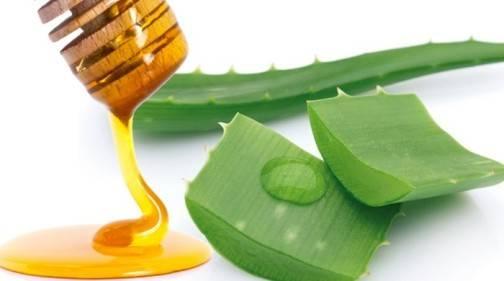 Алоэ с медом от кашля: рецепт приготовления в домашних условиях