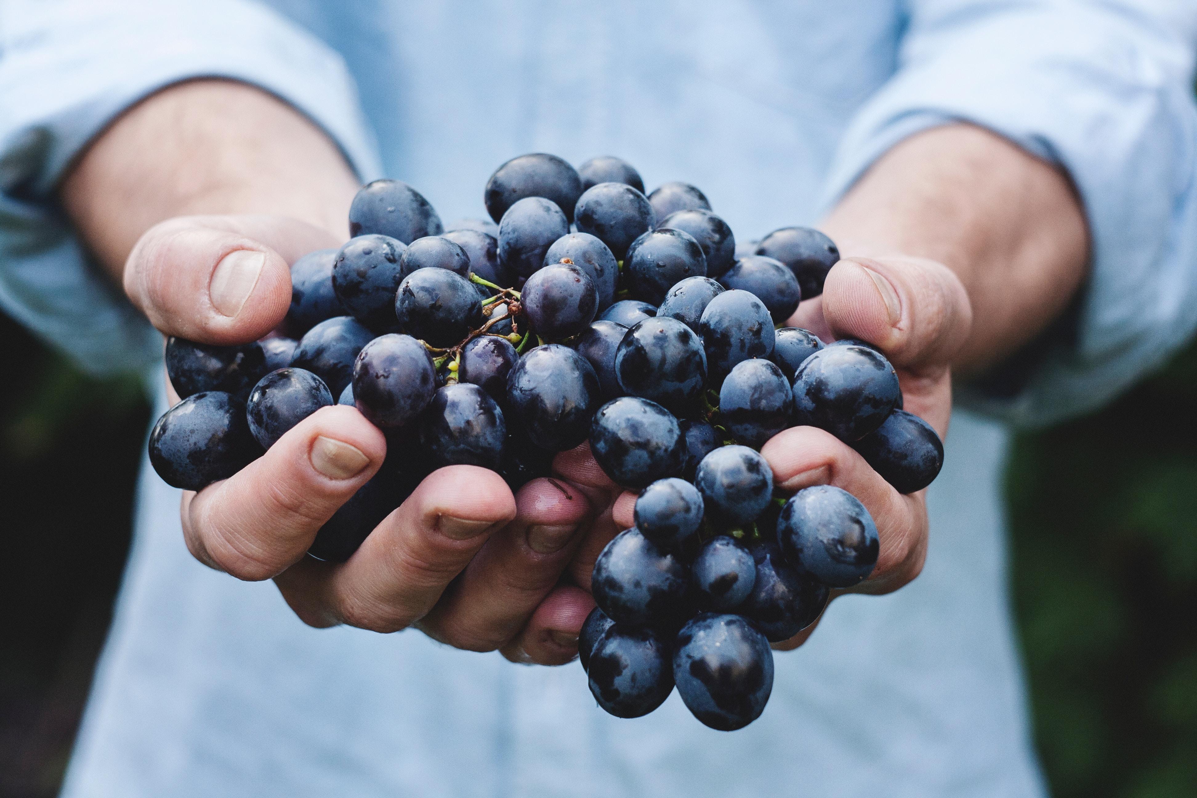 Какие ягоды чистят и укрепляют стенки сосудов, разжижают кровь — топ 8