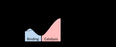 """Презентация на тему: """"ферменты что это? ферменты, или энзимы- это органические катализаторы белковой природы, которые ускоряют реакции, необходимые для функционирования живых."""". скачать бесплатно и без регистрации."""