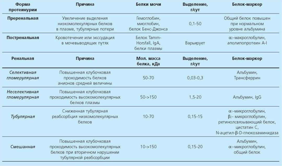 Белок в моче (протеинурия): возможные причины, нормы, симптомы, тактика наблюдения и лечения