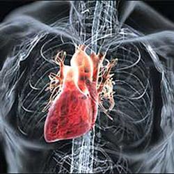 Постинфарктный кардиосклероз: что это, развитие, лечение, прогноз