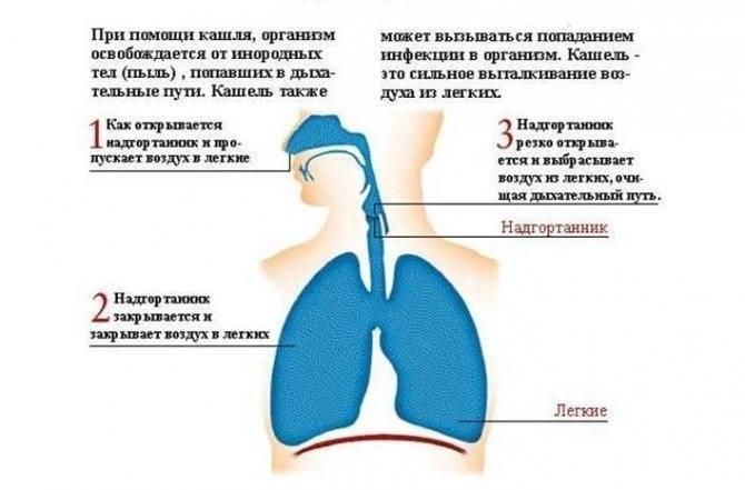 Первые признаки бронхиальной астмы: что делать?