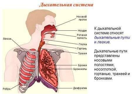 Трахеит бронхит симптомы лечение