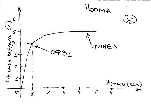 Спирометрия (спирография): что это такое, показания и противопоказания, расшифровка результатов фвд (функции внешнего дыхания)