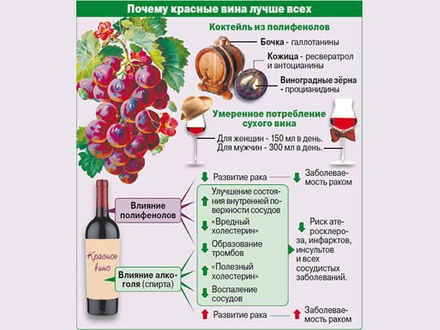 Как влияет вино на печень