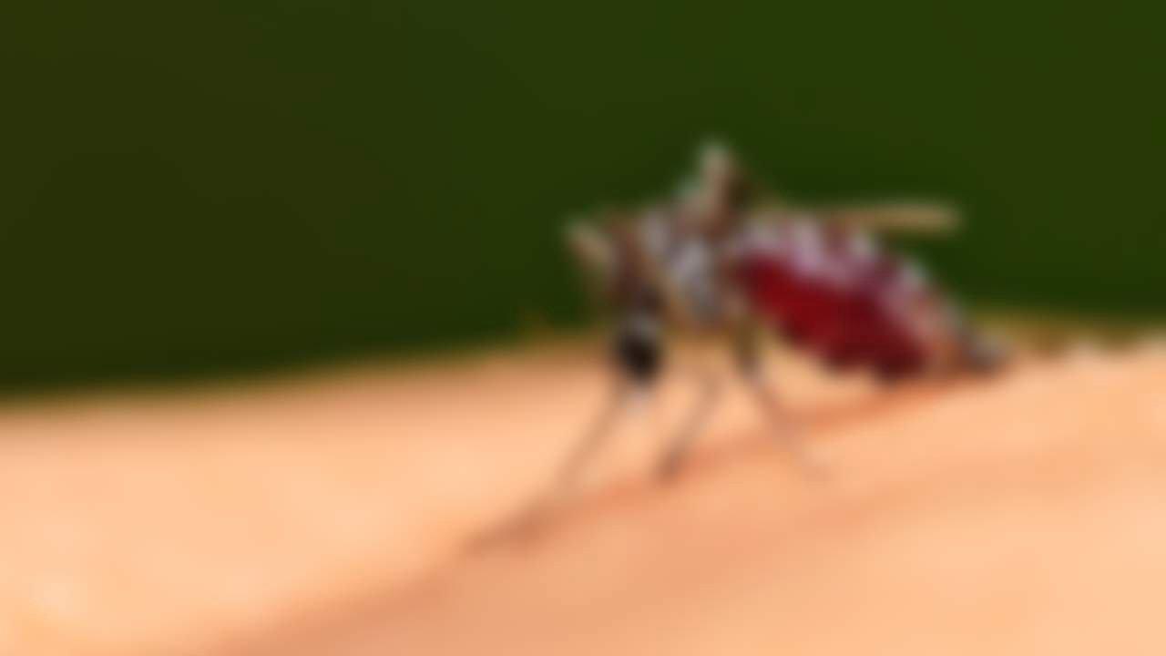 Малярия - симптомы  и лечение