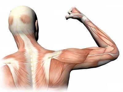 Мышечная дистрофия: причины, симптомы и лечение заболеваний мышц