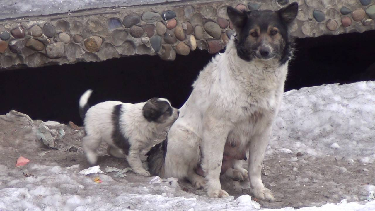 Помогает ли собачье мясо от туберкулеза