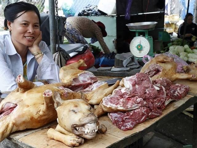 Можно ли есть собачье мясо: чем полезно для человека, лечит ли туберкулез