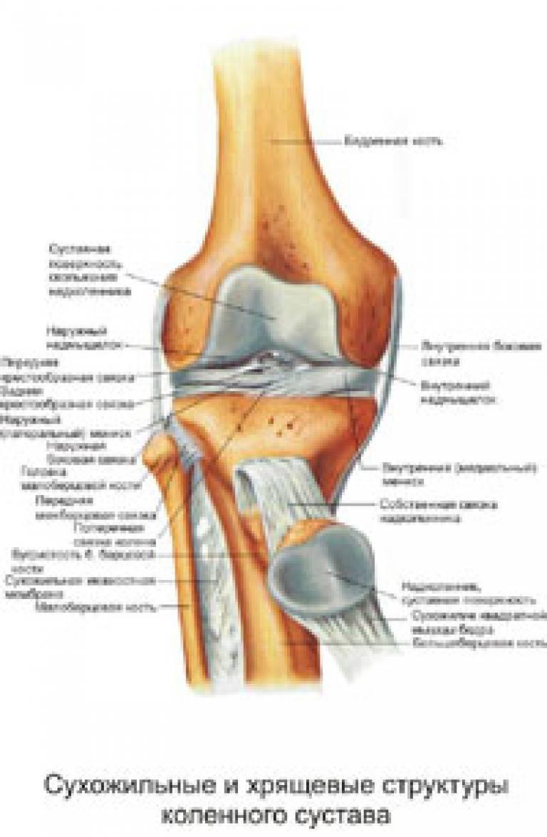 Экзостоз костно хрящевой коленного сустава десны бедренной и плечевой кости
