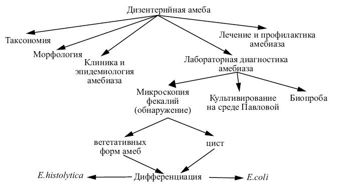 Симптомы и лечение амебной дизентерии