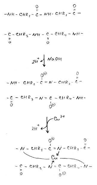 Цистин: применение в спорте, плюсы и минусы аминокислоты