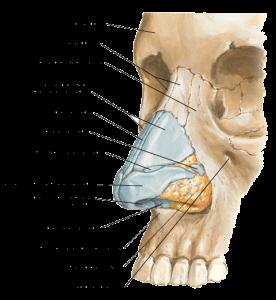 Перелом костей носа - описание болезни