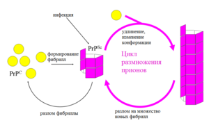 Прионы: идеальные убийцы и возможный ключ к бессмертию – москва 24, 17.06.2015