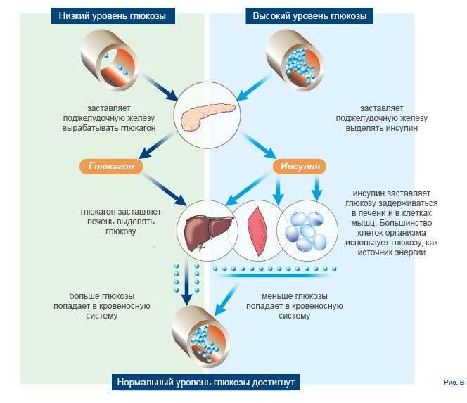 Функциональный гиперинсулинизм диета. что такое гиперинсулинизм?