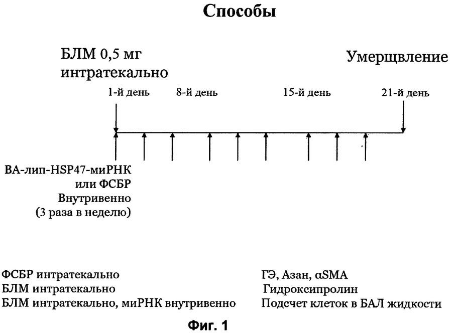 """Препарат """"колофорт"""": инструкция по применению, аналоги, состав и отзывы"""