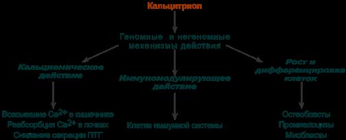Кальцитриол гормон