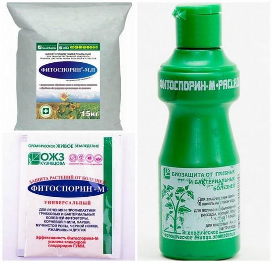 Природный биофунгицид «фитоспорин-м»