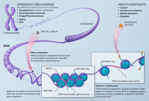 Экспрессия генов