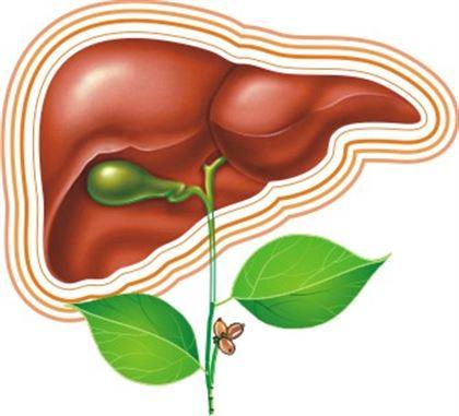 Диета при жировом гепатозе печени: принципы питания и менюдиагностика и лечение печени и желчного пузыря