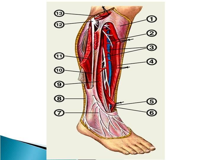 Полинейропатия нижних конечностей