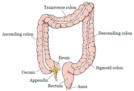 Белковая диета после операции на кишечнике
