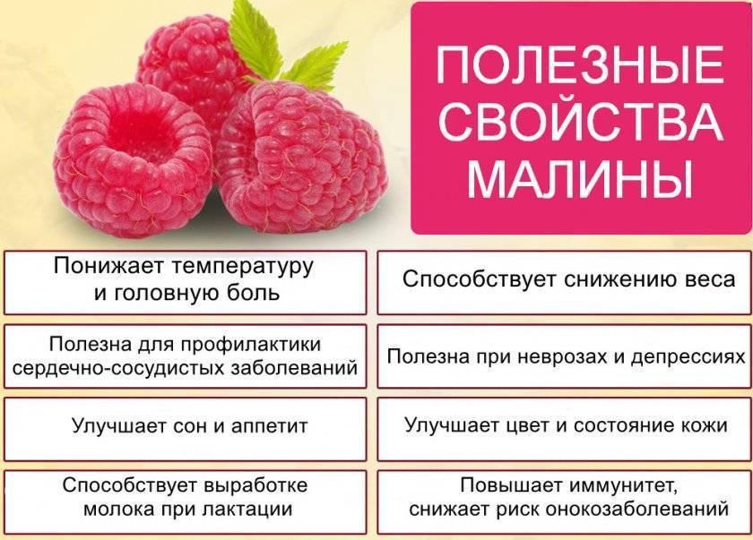 Малина: лечебные свойства и выращивание, польза