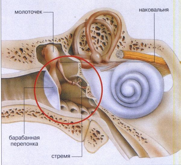 Почему болит ухо при насморке и что делать, как лечить