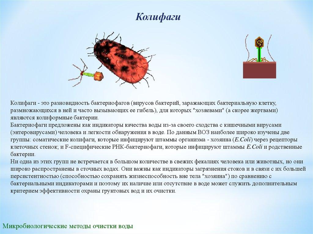 Патогенные или болезнетворные микроорганизмы – причина инфекционных заболеваний