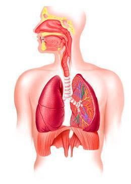 Лечение пневмонии (воспаления лёгких) народными средствами