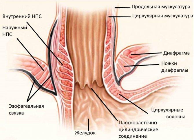 Недостаточность кардии желудка симптомы и лечение