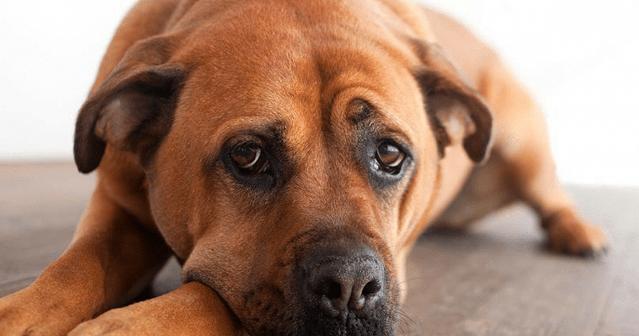 Инструкция по применению и аналоги пропалина для собак