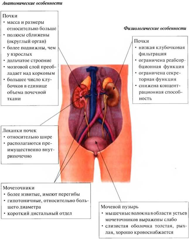 Хронический гломерулонефрит: как жить с заболеванием