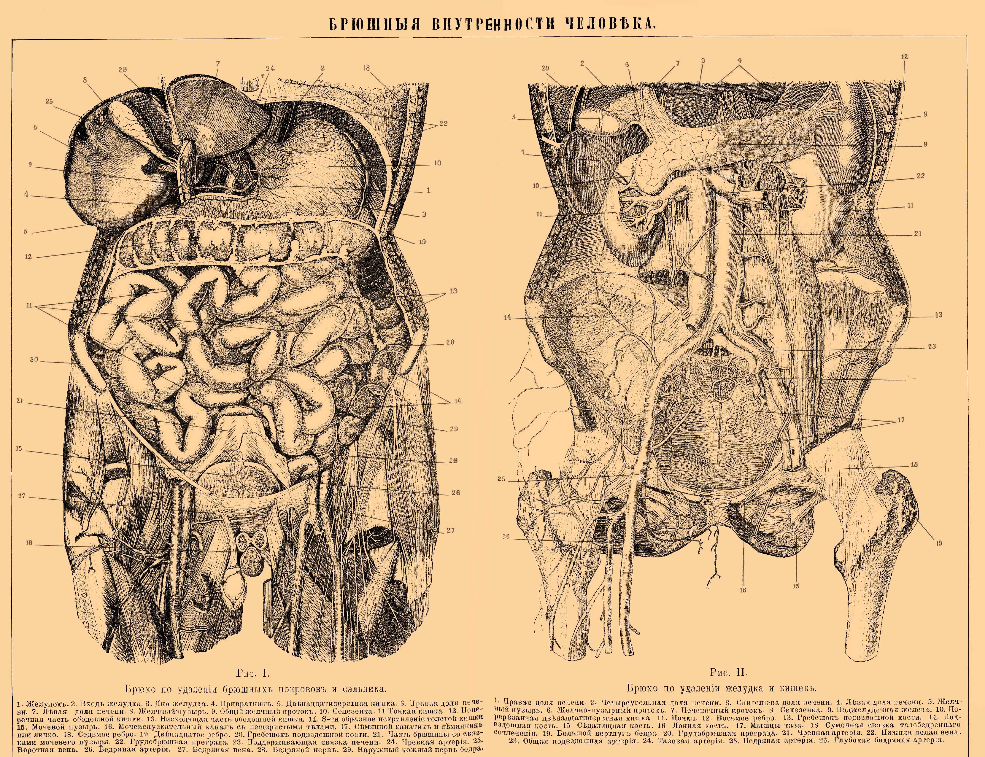 Причины интоксикация организма. диагностика и лечение