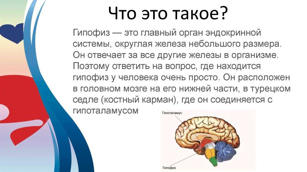 Аденогипофиз википедия