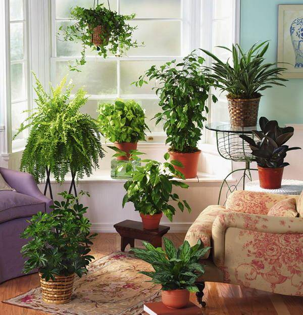 10 комнатных растений, очищающих воздух в помещении